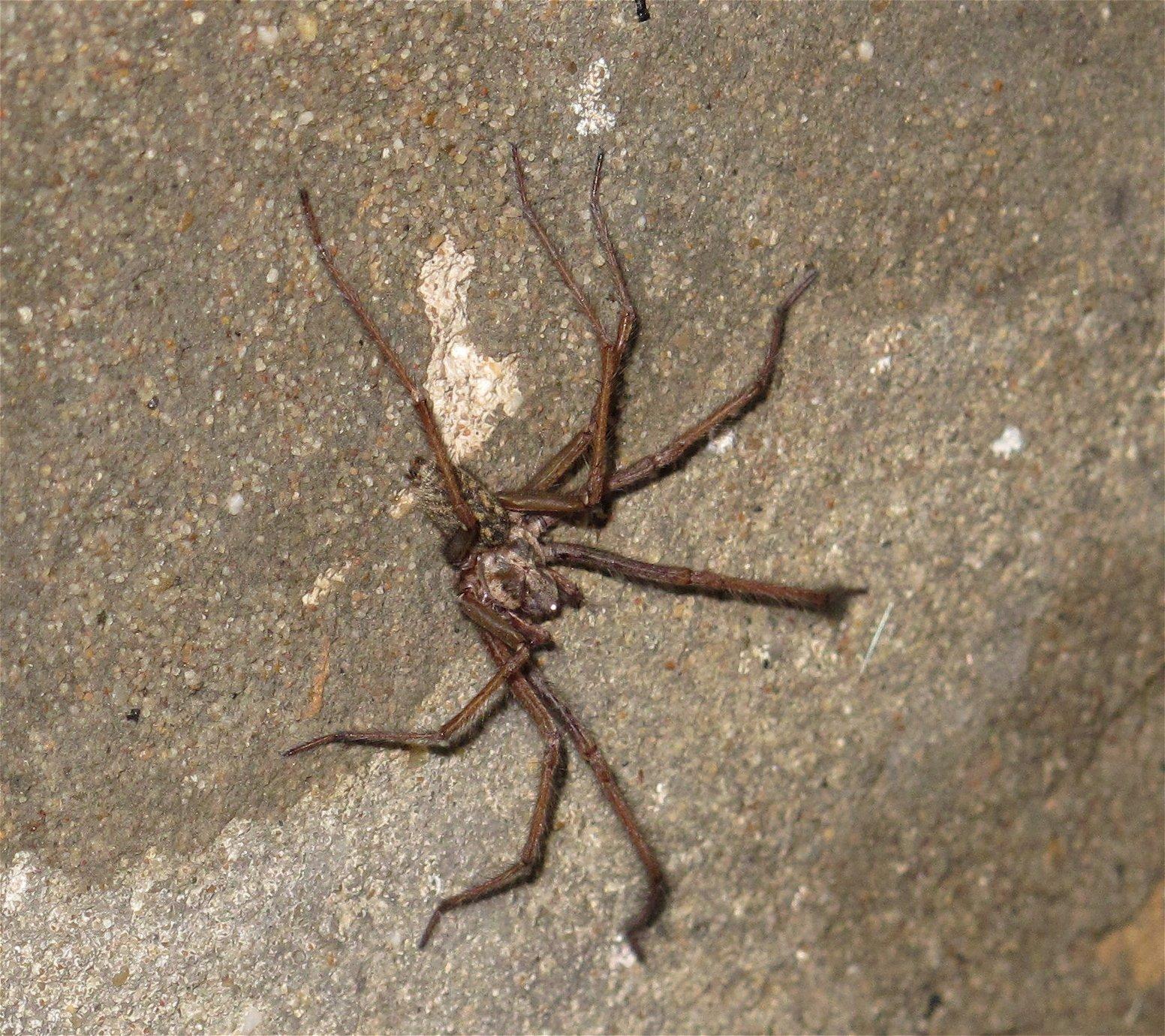 BKM Duveltjesgracht spin